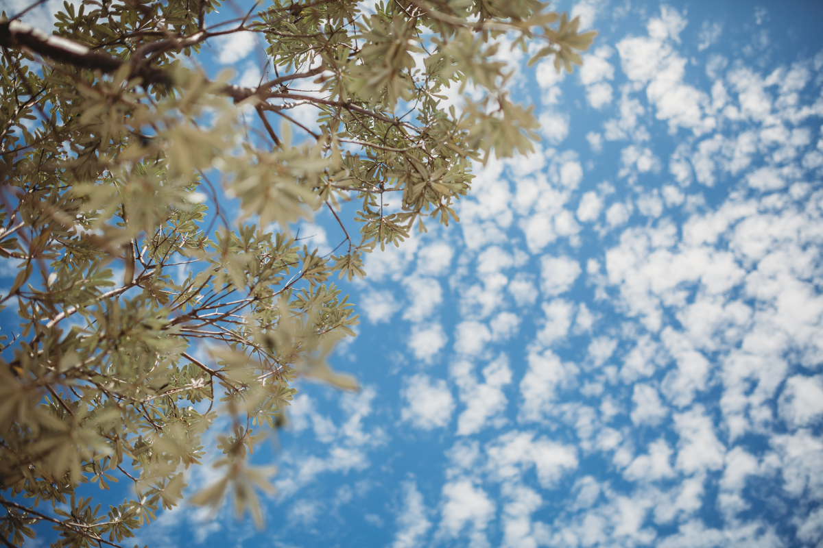 View of sky and tree looking up from below