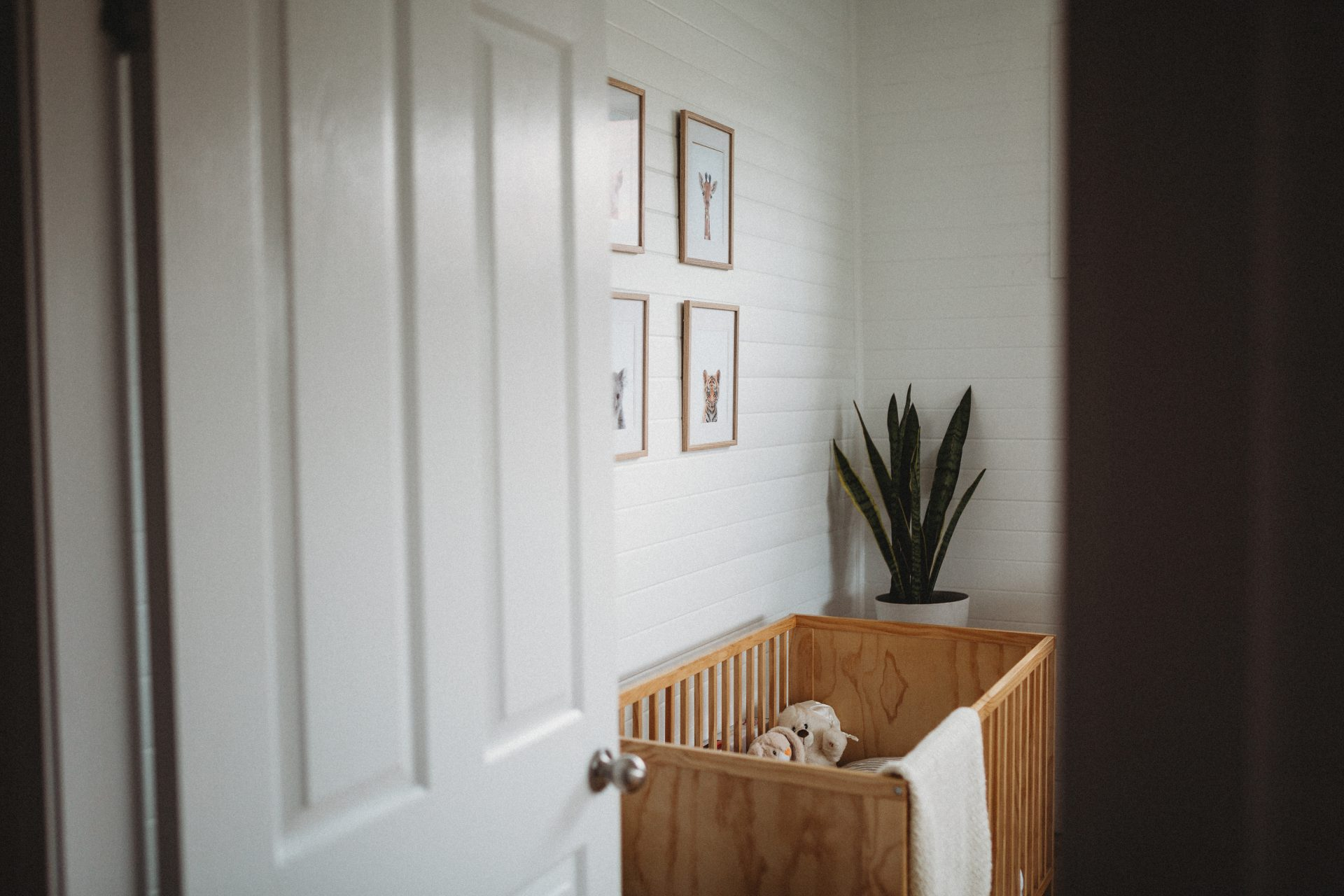 At the doorway looking into a nursery, with a timer cot and animal artwork on the walls above it. A tall plant in the corner